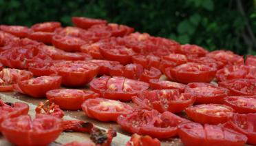 sun drying tomatoes