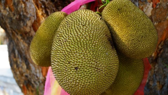 jackfruit is a food that begins with j